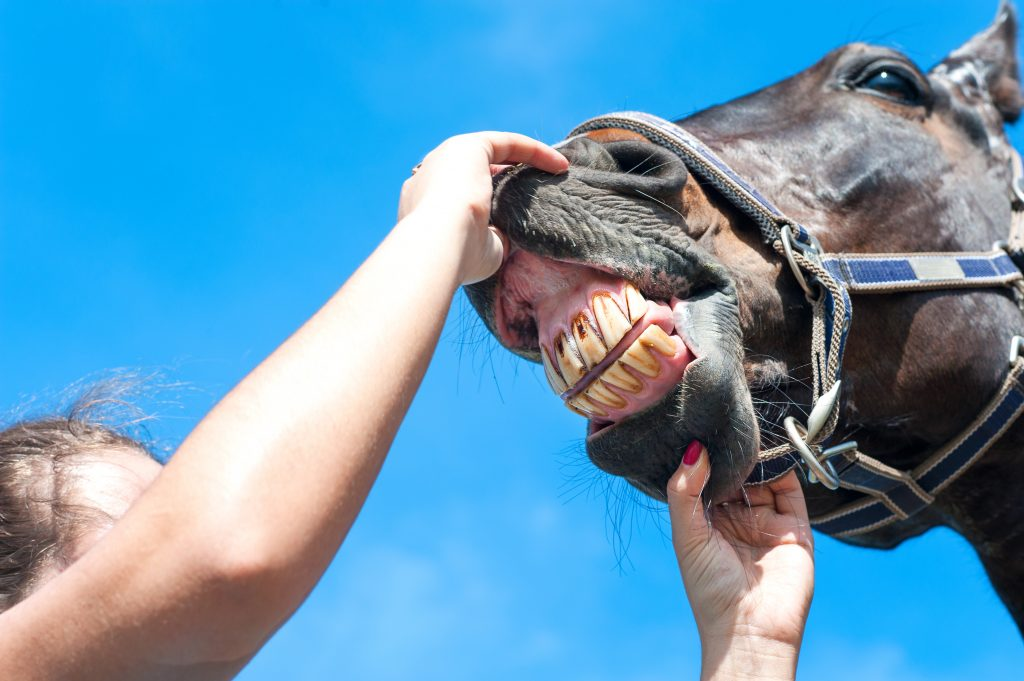 We're not horsing around when we say that you need regular dental check-ups.  See your dentist every six months to make sure little problems don't become horse-sized!  Call Dr. Mark Warner's office today at 707-422-7633 to schedule an appointment.